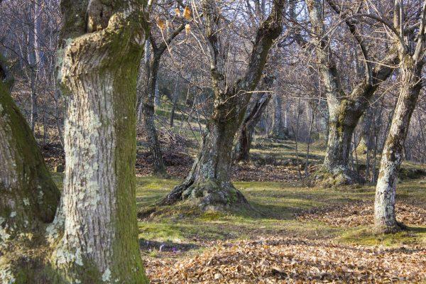 bosco emilia romagna ragù di cervo